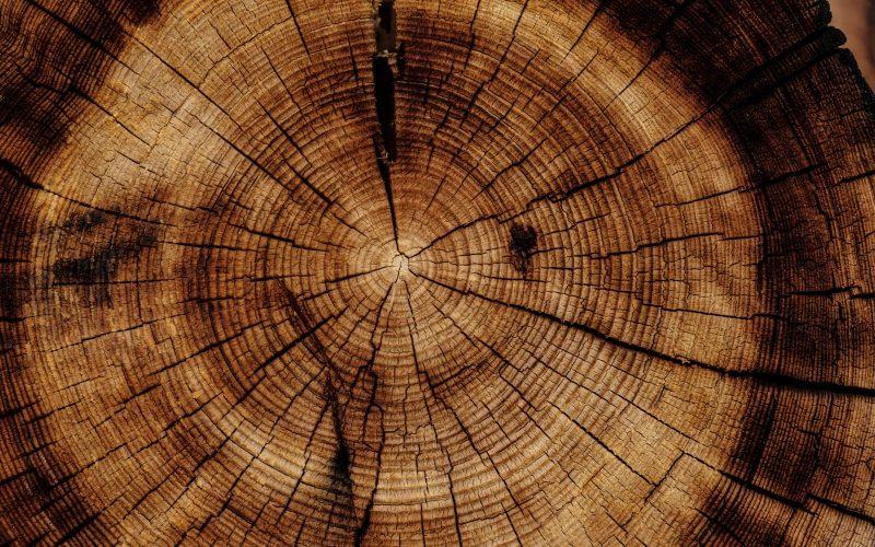 Ekonomiczna sytuacja przemysłu drzewnego w Polsce. Wyzywania na 2020
