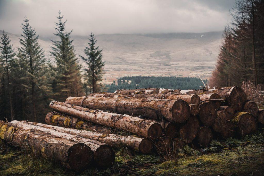 Problemy i wyzwania stojące przed przedsiębiorcami z branży drzewnej